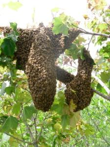 scott swarm (9)-WeMayBeProne